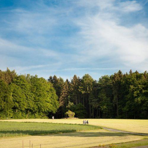 berggasthof-wilhelmshoehe-impressionen-panorama